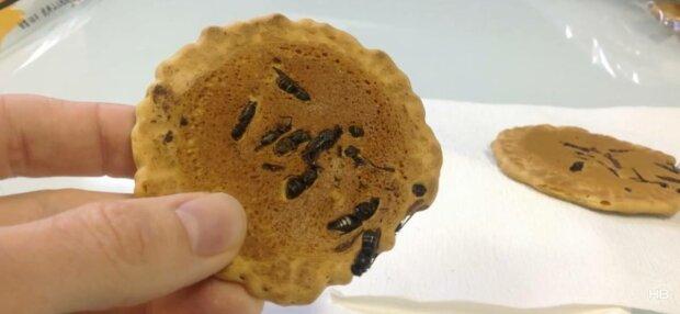 Готування комах, фото: скріншот з відео