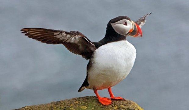 Червона Книга поповнилася чотирма видами британських пташок