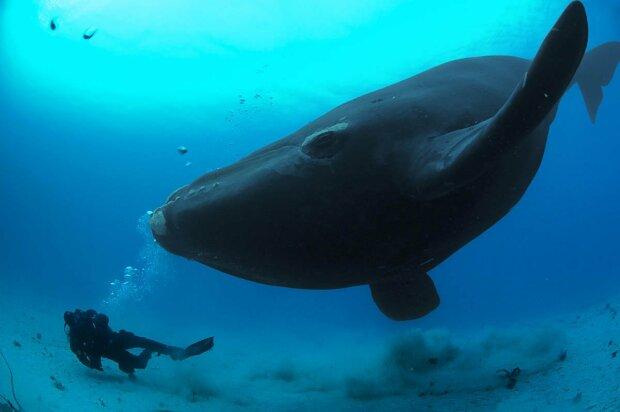 Годує весь океан: куди кит потрапляє після смерті, неймовірне відео