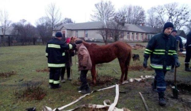 Рятувальники витягли з колодязя коня (фото)