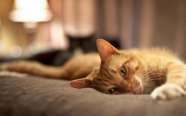 Медики спасают: домашняя кошка изувечила целую семью