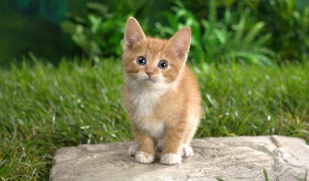 Благотворительная ярмарка кошек пройдет завтра в Киеве