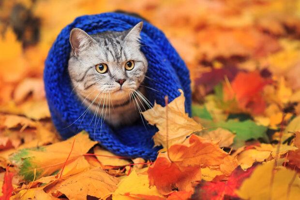 Кінець аномальної температури: листопад принесе в Україну справжню осінь