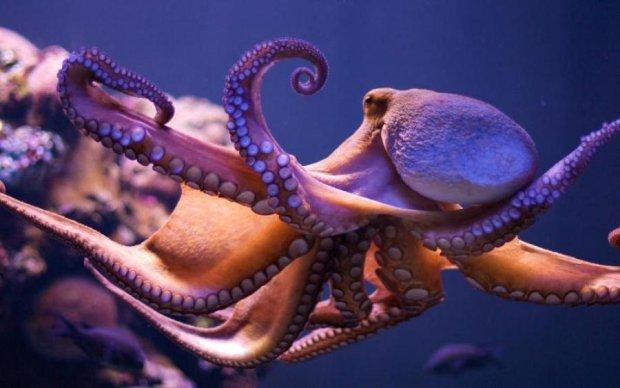 Ученые впервые засняли новое вооружение осьминога