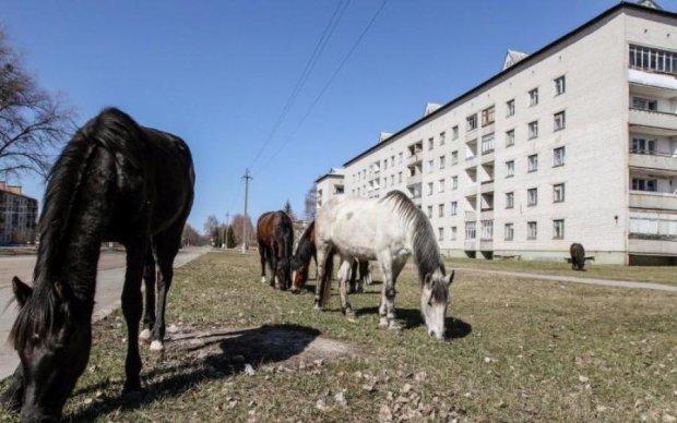 Страшні знімки з Чорнобиля, від яких мороз по шкірі
