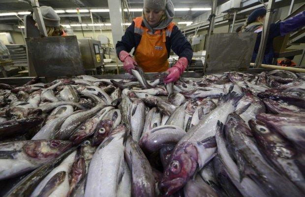 """Україна влаштувала Європі """"рибний четвер"""" та встановила рекорд багатотонний"""