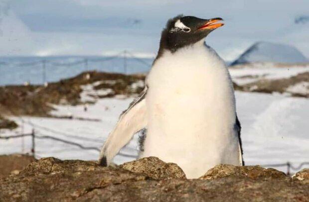 Это не снег: украинские ученые показали уникальное явление в Антарктике