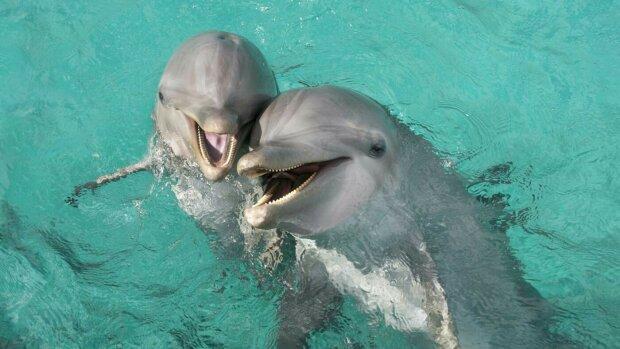 Дельфины, Пикабу