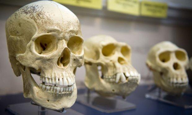 Поховання покалічених скелетів розкрили страшну таємницю