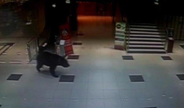 У Хабаровську ведмідь увірвався на територію дитсадка (відео)