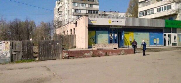 Запоріжанка ризикує отримати термін за улюблене дерево мера Києва Кличка