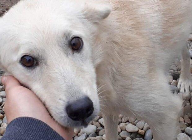 Собака, фото: instagram.com/michelleburleson
