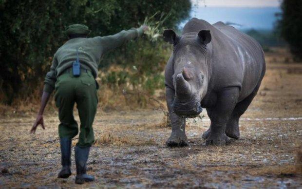 Носоріг, мавпа і слон: які тварини назавжди зникнуть з лиця Землі