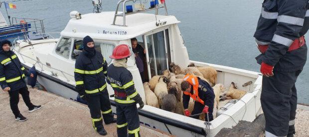 Порятунок овець, USA News Hub