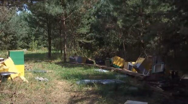 На Тернопільщині невідомий спалив бджіл уві сні, вулики в попіл