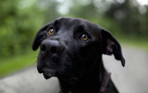 Добродушна собака на прізвисько Міа знайшла дім і кожен день тішить господарів особливим танцем. Соцмережі безтями від крихітки