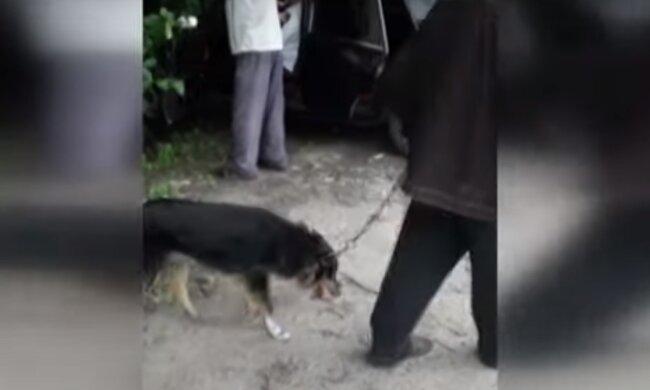 Живодери познущалися над собакою через убитих птахів – на Хмельниччині пенсіонерів звинувачують у жорстокості