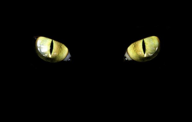 Киян попередили про небезпеку: дикий звір утік із зоопарку, заглядає у двори