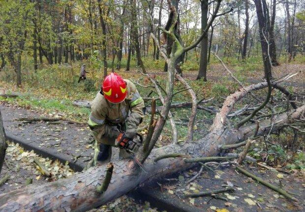 Вінницькі лісники похвалилися машиною за мільйон, скандал на всю область: Зеленському доведеться нагрянути після Харкова