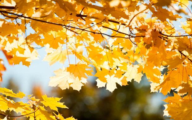 Погода на 27 жовтня: тепло повертається в Україну