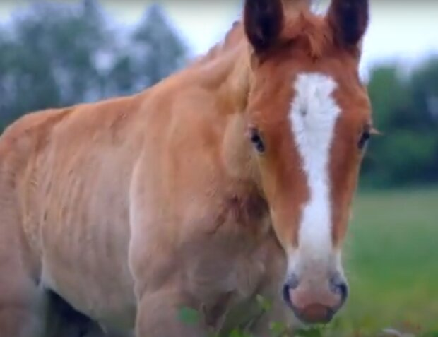 """Під Дніпром дівчині повернули викраденого коня, - """"Три дні без їжі та води"""""""
