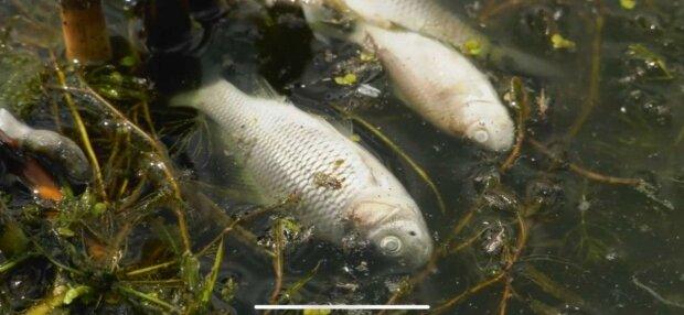 Під Дніпром село накрило жахливим смородом, людям нічим дихати – річка винесла сотні мертвих тіл