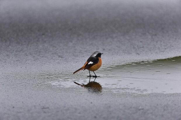 Погода у Запоріжжі 27 грудня: небо вимкнуло режим дощу, але є проблема