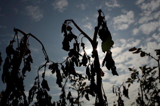 Засуха, фото: Unian