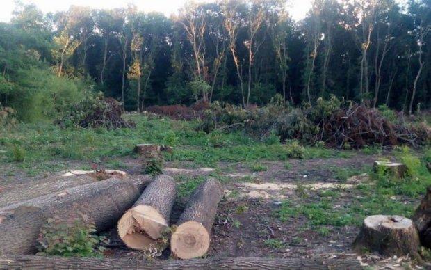Европейцы обеспокоились теневым лоббизмом и лесной коррупцией в Украине, - СМИ
