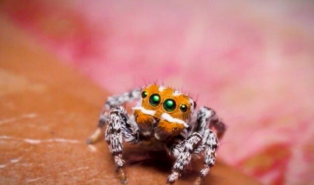 Новый вид паука, кадр из видео