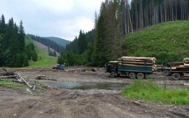 Активісти просять владу врятувати українські ліси