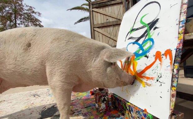 Свиня, яка малює, фото: Facebook