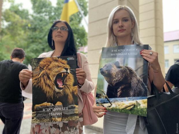 Зоозащитники победили живодеров: суд запретил Одесскому цирку жесткую эксплуатацию животных