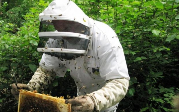 Пчеловод заработал на свадьбу собственным задом