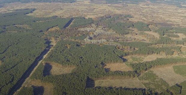 Названа причина водяного пекла на Прикарпатті, і вирубка лісів тут ні до чого