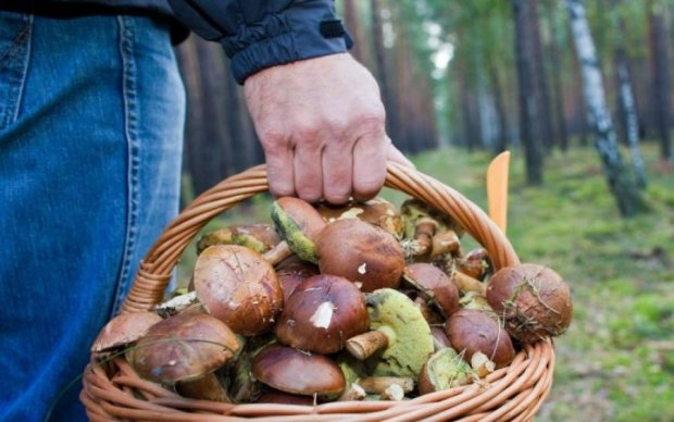 Будьте внимательны: грибы массово косят украинцев