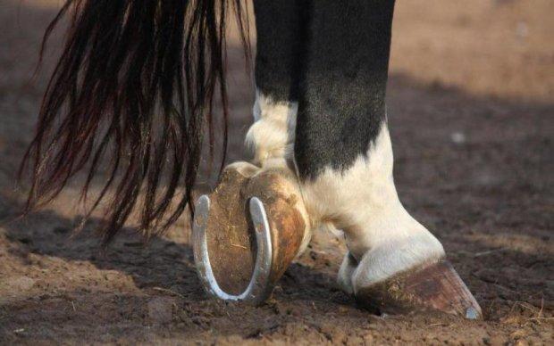 Вчені з'ясували, скільки пальців було у предків коней