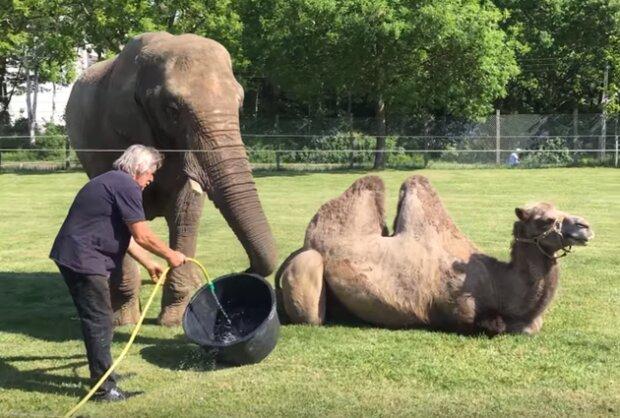 """Прем'єр розповів """"слугам народу"""" про велике кохання верблюда і слона: """"Забезпечимо гідне життя"""""""