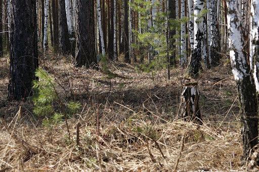 В лесу под Харьковом наткнулись на тело пропавшей медсестры - искали Анну, а нашли Оксану