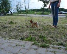 Прогулка с собакой, Иллюстративное фото