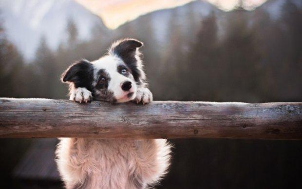 В Киеве появится новый центр для животных