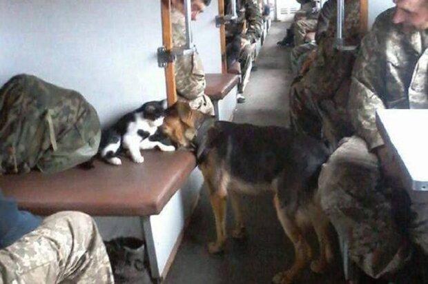 Животные в вагоне с военными, фото: Facebook Резонанс