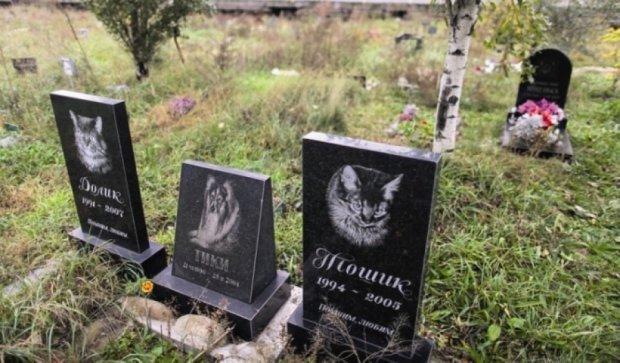 На Троещине построят кладбище для животных