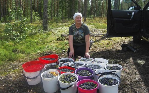 Смертельні дари лісу: ці ягоди краще обходити стороною