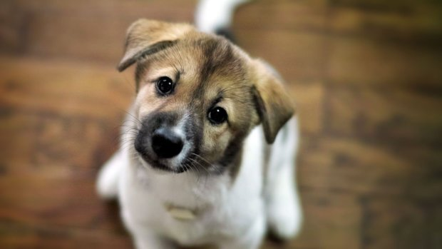 Украинский Хатико: преданная собака пришла искать хозяйку в аптеку