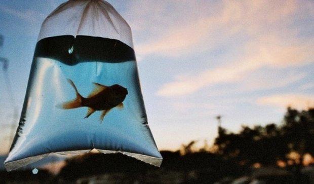 Риби відновлять екосистему Землі