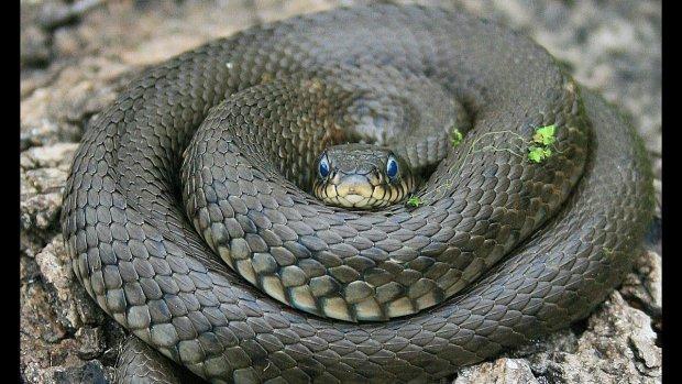 Несподівана знахідка у несподіваному місці: зі шлунка древньої змії витягли невідому істоту
