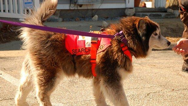 Тесты не нужны — ученые научили собак распознавать коронавирусных больных