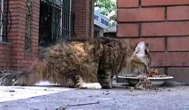 Кішка Мурка, якій відірвало лапки снарядом, стане мамою