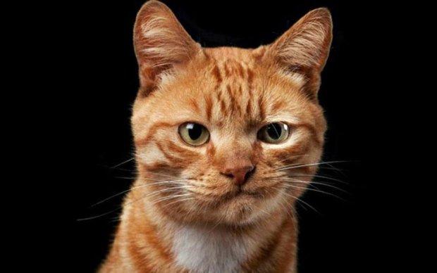 Львівський музей розмістив незвичайну вакансію для кота